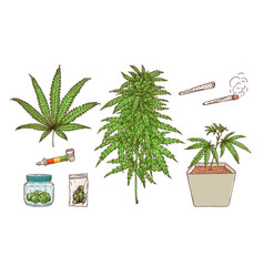 Cannabis leaves green weed hemp icon vector