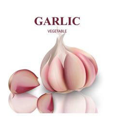 garlic isolated on white background vector image