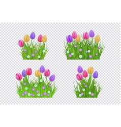 Green grass tulip flowers set vector