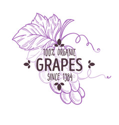 100 percent organic grapes label with flavourful vector image