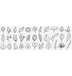 flowers hand drawn doodle set vector image