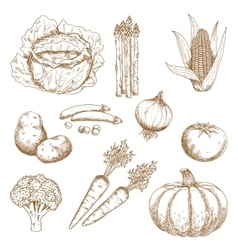 Hand drawn sketches of vegetables vector image