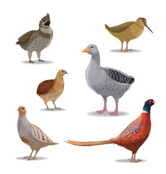 Isolated hunting birds wildfowl vector