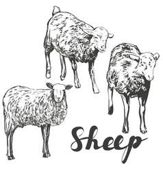 sheep set hand drawn realistic vector image vector image