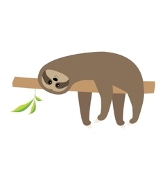 Sloth lying on tree branch Cute cartoon character vector image