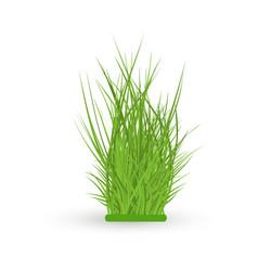Green grass leaves bush vector