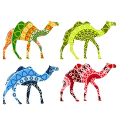 Indian Camel with a pattern isolated on white back vector