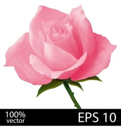 Pink rose realistic vector image