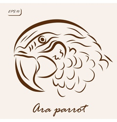 Ara parrot vector
