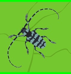 Beetle bug vector