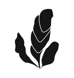 Design seaweed and algae logo vector