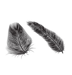 feather quill icon background bird vector image