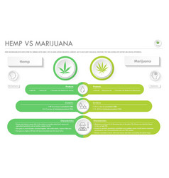 hemp vs marijuana horizontal business infographic vector image