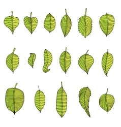 Leaves Set vector