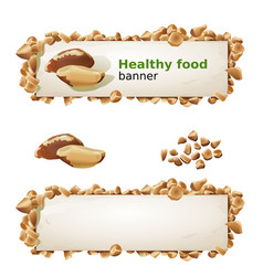 set banners with brazilian nut and ground nuts vector image