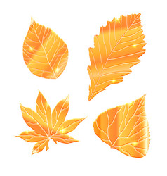 Set of realistic golden leaves with sparkle vector