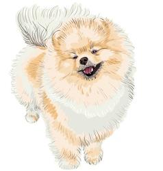pedigreed dog vector image
