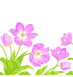 Tulips bouquet seamless border composition vector image vector image