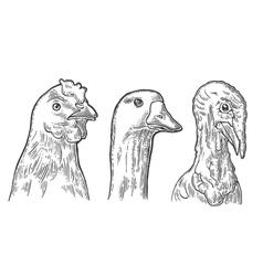Heads chicken goose and turkey vintage vector