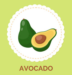 green half opened avocado on white circle and vector image