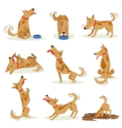Brown Dog Set Of Normal Everyday Activities vector image vector image