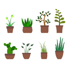 color set with house plants icons vector image vector image