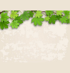 maple tree branch green on old wall background vector image vector image