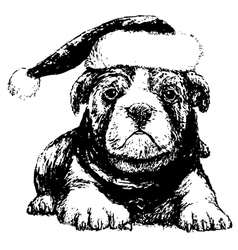 Bulldog with red hat bw vector image