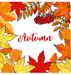 hello autumn hand drawn fall leaves vector image