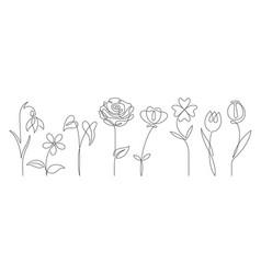 single line art flower outline set blooming vector image