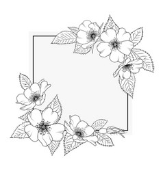 wild rose rosa canina floral border frame template vector image