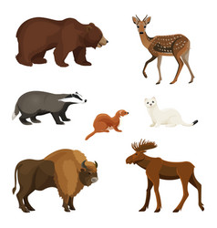 Forest animals with fluffy fur predators and vector