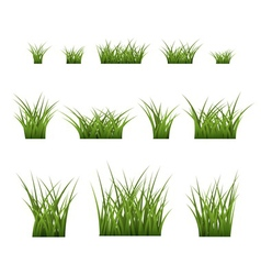 Green grass bushes set plant vector