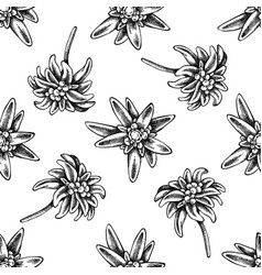 seamless pattern with black and white edelweiss vector image