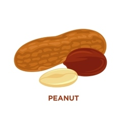 Set of peanuts isolated vector