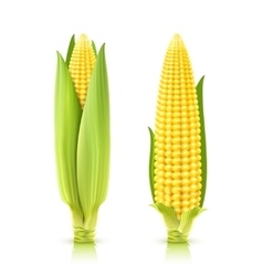 Sweet Corn Set vector image