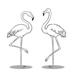 pink flamingo bird coloring book vector image vector image