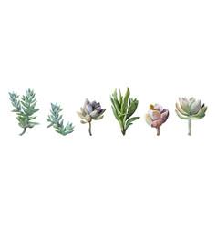 succulent cactus plant watercolor elements set vector image