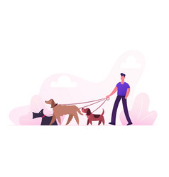 breeder male character walking with dogs team vector image