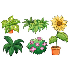 Flowerpots and plants vector image