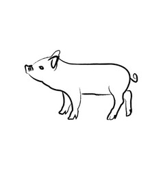 outline draw pig vector image