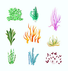 Set of underwater plants underwater plant vector