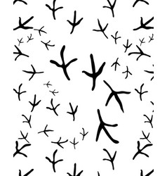 Traces of birds vector
