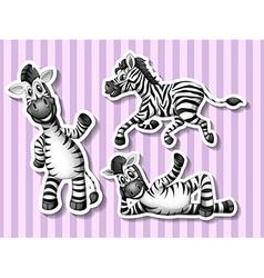 Zebras vector image