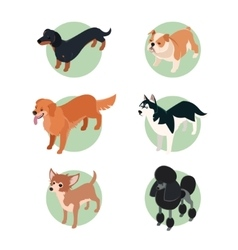 Collection of isometric dogs2 vector image vector image