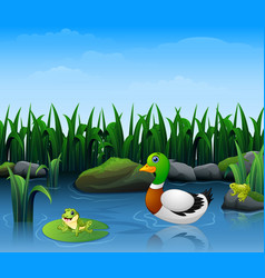 ducks swim with frogs in the river vector image