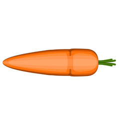 isolated carrot icon vector image