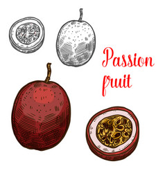 Passion fruit sketch exotic fruits icon vector