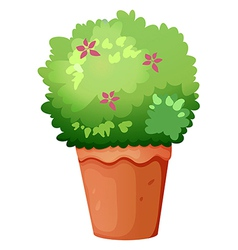 A pot with a green plant vector image vector image