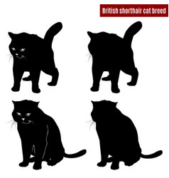 Cat black silhouettes on white background vector
